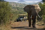 Pilanesberg Open Safari